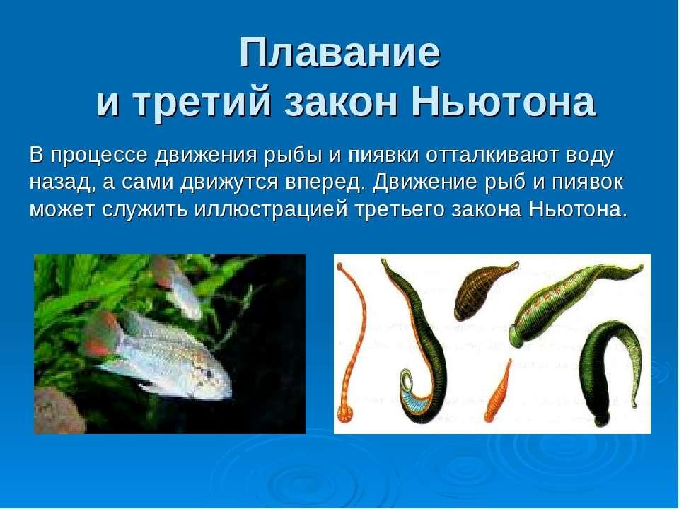 Плавание и третий закон Ньютона В процессе движения рыбы и пиявки отталкивают...