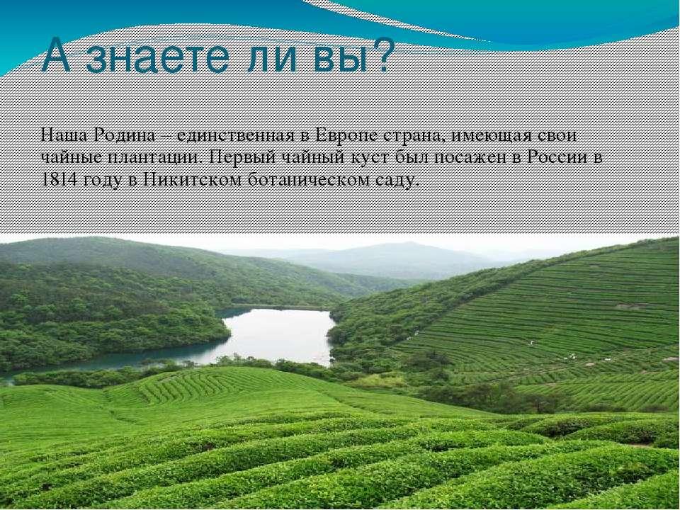 А знаете ли вы? Наша Родина – единственная в Европе страна, имеющая свои чайн...