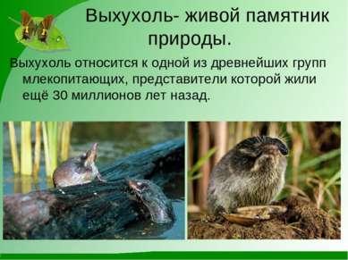Выхухоль- живой памятник природы. Выхухоль относится к одной из древнейших гр...