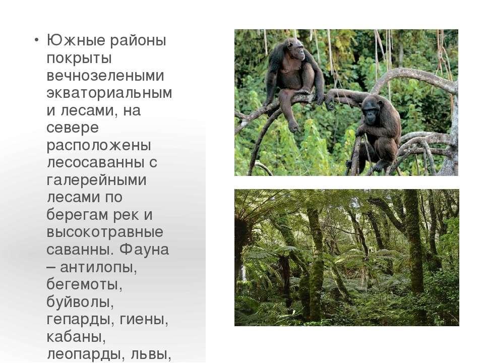 Южные районы покрыты вечнозелеными экваториальными лесами, на севере располож...