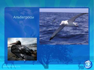 Альбатросы