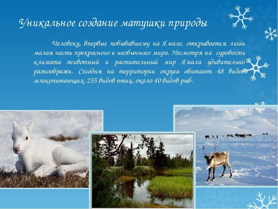 Уникальное создание матушки природы Человеку, впервые побывавшему на Ямале, о...