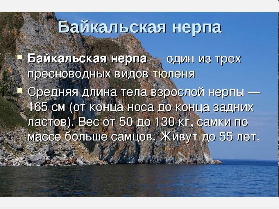 Байкальская нерпа Байкальская нерпа — один из трех пресноводных видов тюленя ...