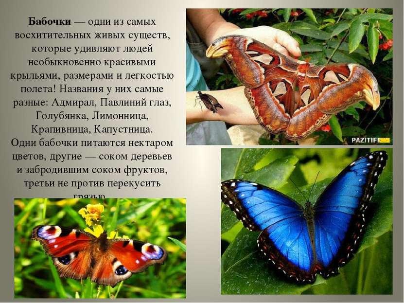 Бабочки— одни из самых восхитительных живых существ, которые удивляют людей ...
