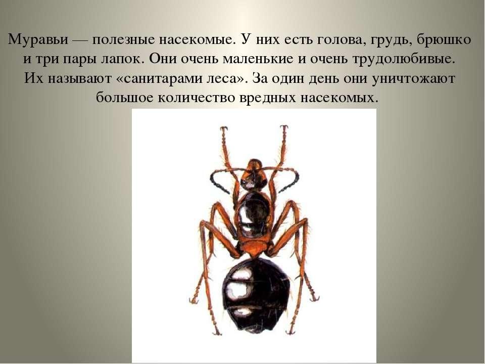 Муравьи — полезные насекомые. У них есть голова, грудь, брюшко и три пары лап...