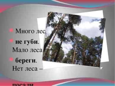 Много леса – не губи. Мало леса – береги. Нет леса – посади.