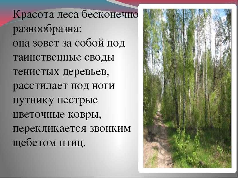 Красота леса бесконечно разнообразна: она зовет за собой под таинственные сво...