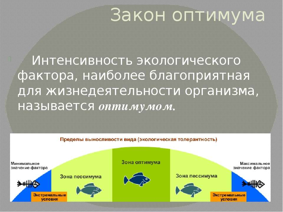Интенсивность экологического фактора, наиболее благоприятная для жизнедеятель...