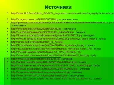 Источники http://www.123rf.com/photo_2497074_frog-macro--a-red-eyed-tree-frog...