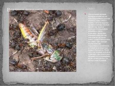 Опыт Для изучения питания муравьев я поместил на купол муравейника кусочек ко...