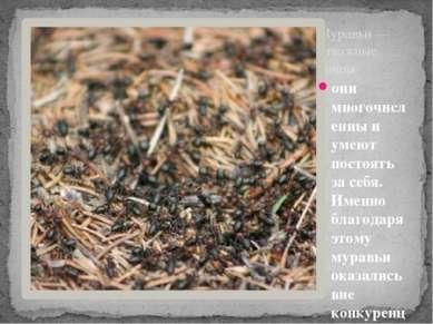 Муравьи — отважные воины они многочисленны и умеют постоять за себя. Именно б...