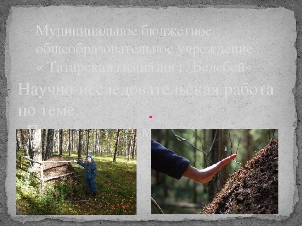 Научно-исследовательская работа по теме «Путешествие в мир муравейника» Муниц...