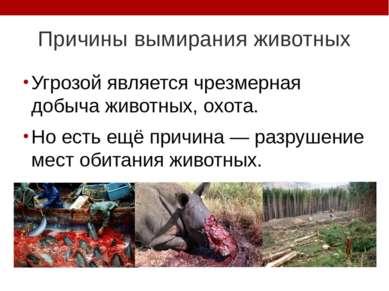 Причины вымирания животных Угрозой является чрезмерная добыча животных, охота...