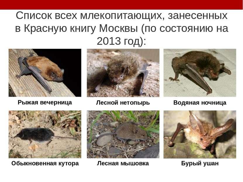 Список всех млекопитающих, занесенных в Красную книгу Москвы (по состоянию на...