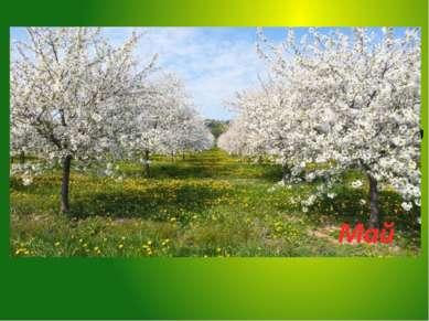 Зеленеет даль полей, Запевает соловей. В белый цвет оделся сад, Пчелы первые ...