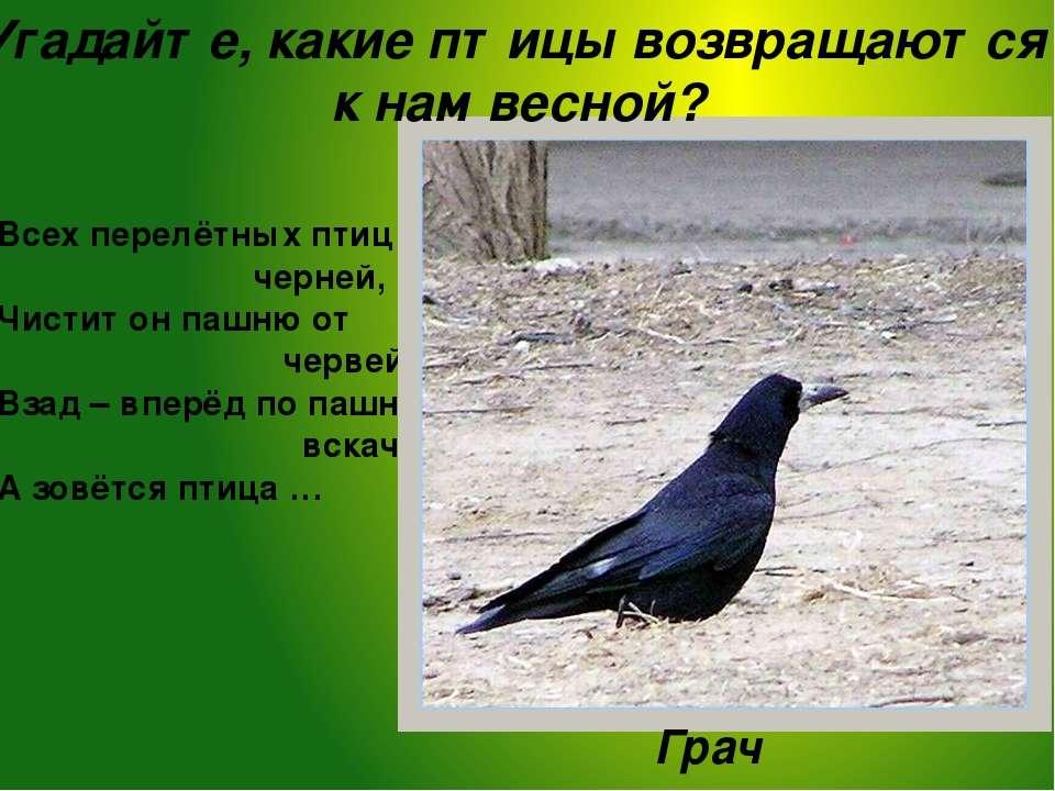 Грачи прилетают раньше других птиц. Считается, что с их прилёта и начинается ...