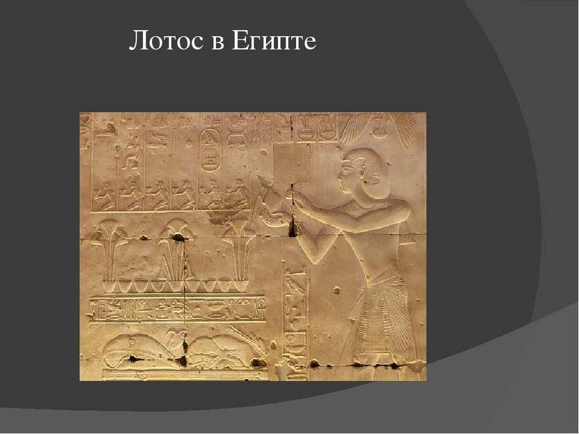 Лотос в Египте