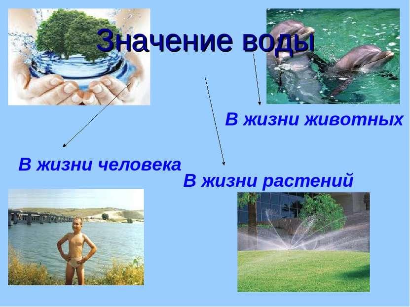 Значение воды В жизни человека В жизни растений В жизни животных