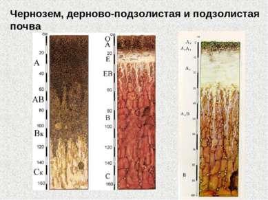 Чернозем, дерново-подзолистая и подзолистая почва