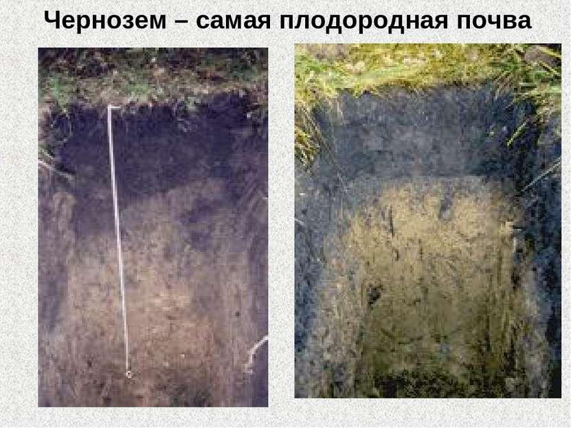 Чернозем – самая плодородная почва