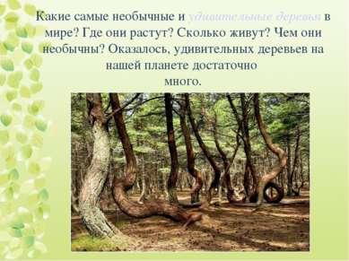 Какие самые необычные и удивительные деревья в мире? Где они растут? Сколько ...
