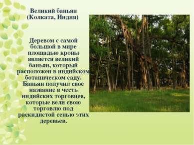 Великий баньян (Колката, Индия) Деревом с самой большой в мире площадью кроны...