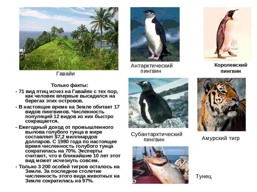 Только факты: - 71 вид птиц исчез на Гавайях с тех пор, как человек впервые в...