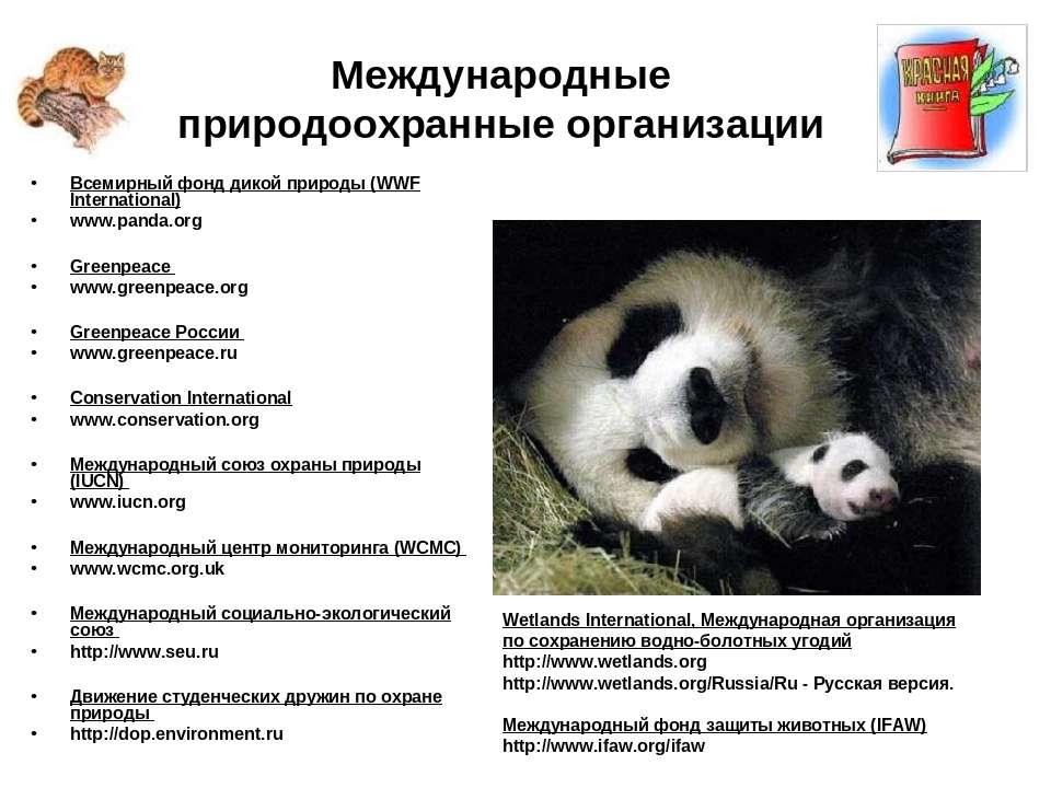 Международные природоохранные организации Всемирный фонд дикой природы (WWF I...
