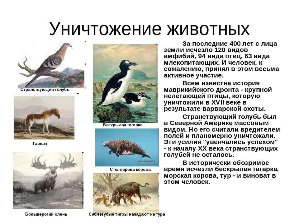 Уничтожение животных За последние 400 лет с лица земли исчезло 120 видов амфи...
