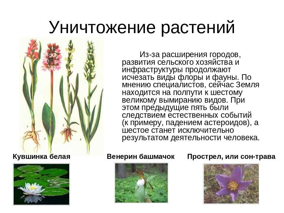 Уничтожение растений Из-за расширения городов, развития сельского хозяйства и...