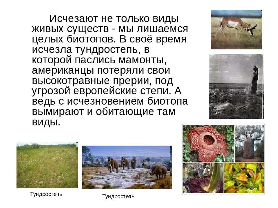 Исчезают не только виды живых существ - мы лишаемся целых биотопов. В своё вр...