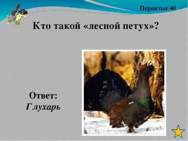 Пернатые 30 Ответ: кукушка Какая птица подбрасывает яйца в чужие гнёзда?