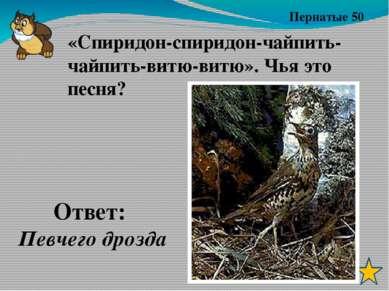 Пернатые 40 Ответ: Глухарь Кто такой «лесной петух»?