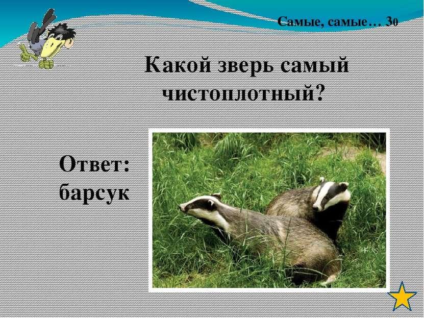 Лес – не только для нашей забавы, Он – богатство нашей страны. Все деревья в ...