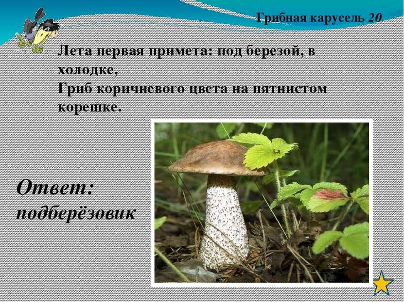Грибная карусель 50 Этот гриб растет во мху под ёлкой, Он звонче всех хрустит...