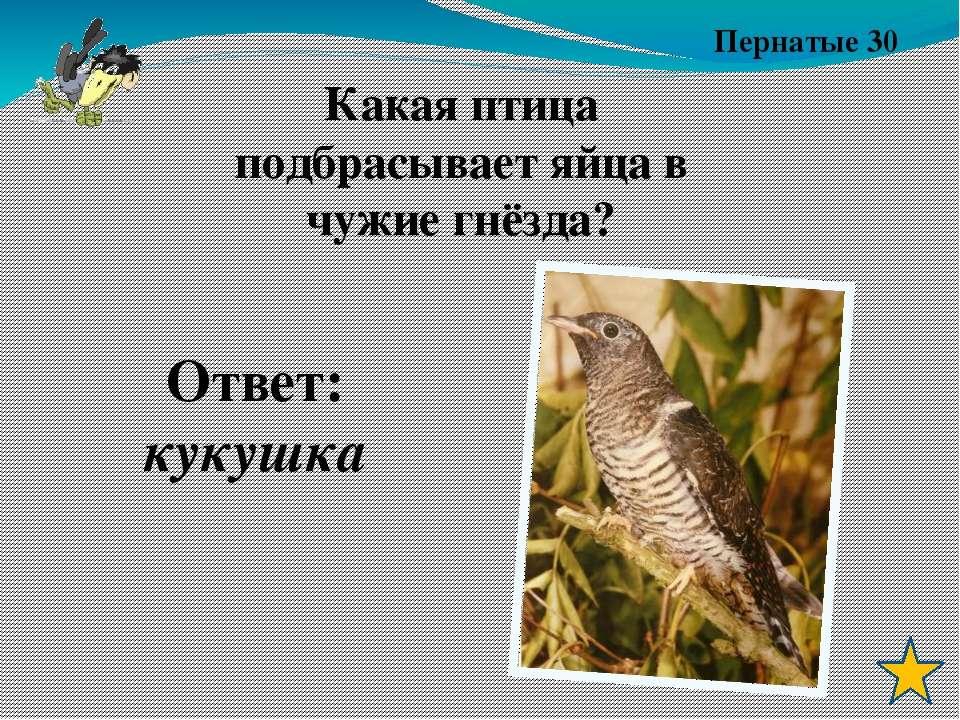 Пернатые 10 Ответ: Поползень Какая птица движется по дереву вниз головой?