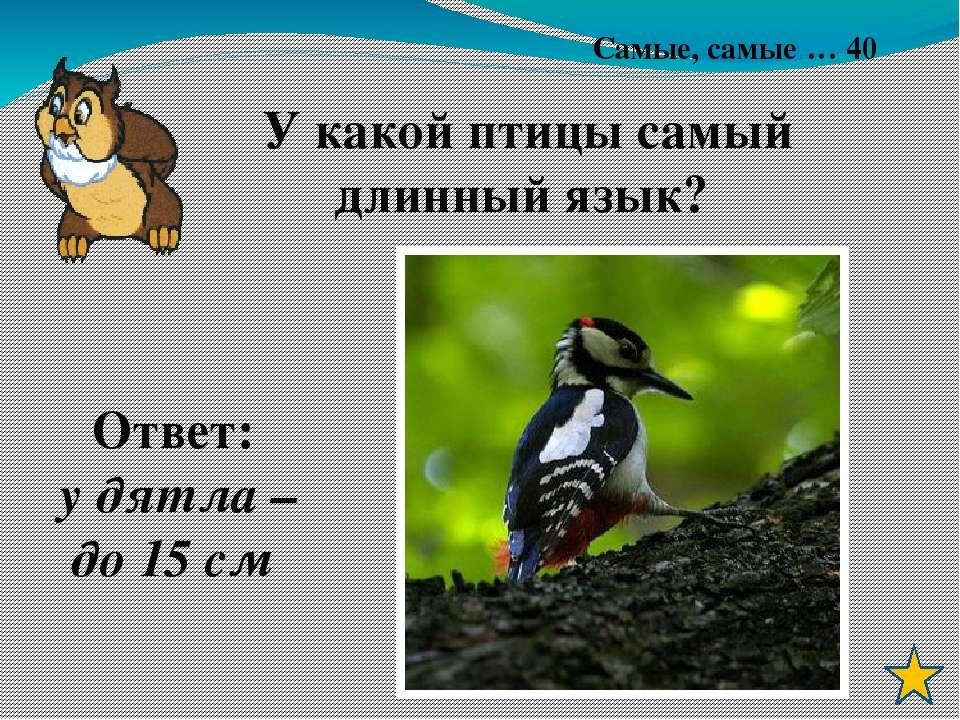 Литература: 1. Журнал «Начальная школа» № 6 2005 г., № 8 2009 2. Журнал «Нача...