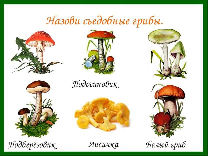 Назови съедобные грибы.