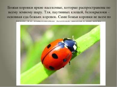 Божьи коровки яркие насекомые, которые распространены по всему земному шару. ...