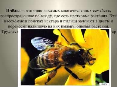 Пчёлы — это одно из самых многочисленных семейств, распространенное по всюду,...