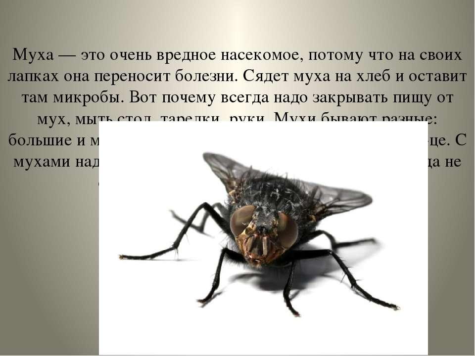 Муха — это очень вредное насекомое, потому что на своих лапках она переносит ...