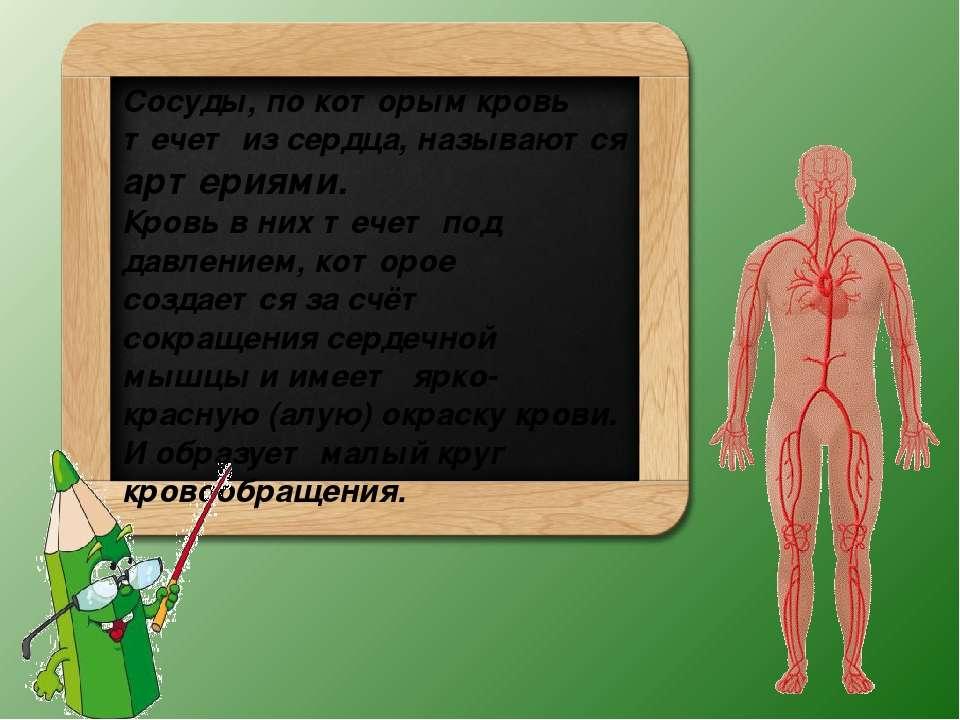 Сосуды, по которым кровь течет из сердца, называются артериями. Кровь в них т...