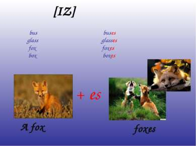 [IZ] bus buses glass glasses fox foxes box boxes A fox foxes + es