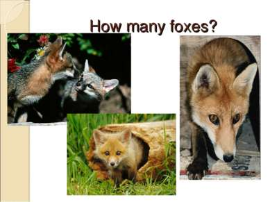 How many foxes?
