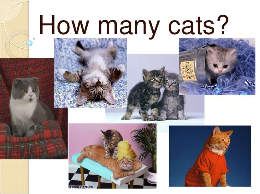 How many cats?