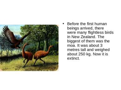 Before the first human beings arrived, there were many flightless birds in Ne...
