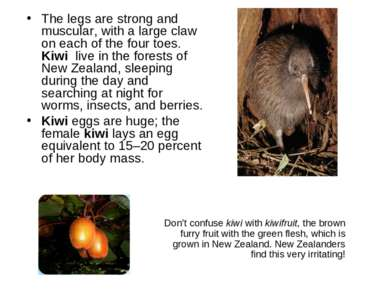 The legs are strong and muscular, with a large claw on each of the four toes....