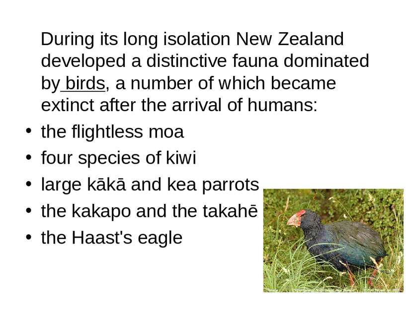 During its long isolation New Zealand developed a distinctive fauna dominated...