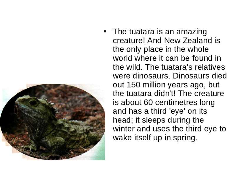 The tuatara is an amazing creature! And New Zealand is the only place in the ...