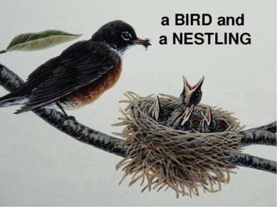 a BIRD and a NESTLING